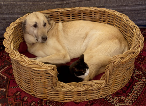 Dog Moses basket